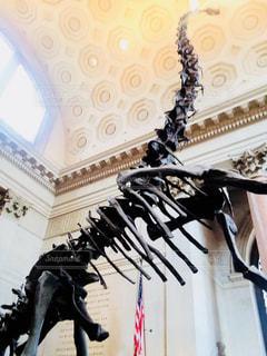自然史博物館内の恐竜のレプリカの写真・画像素材[1259752]
