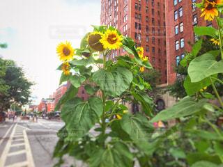 風景,空,夏,ニューヨーク,ビル,木,緑,ひまわり,道路,アメリカ,景色,向日葵,都会,マンハッタン,通り,夏バテ,熱中症,フォトジェニック,インスタ映え,熱中症対策