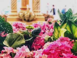 ホテルロビーに咲く紫陽花の写真・画像素材[1447824]