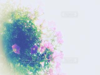 風景,花,屋外,ピンク,緑,植物,景色,観光,旅行,pink,サフィニア,フォトジェニック,ハーシー,ペンシルベニア,インスタ映え,ハーシーパーク