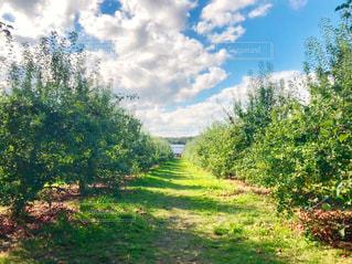 自然,風景,空,建物,秋,ニューヨーク,木,屋外,海外,緑,雲,晴れ,葉,アメリカ,景色,果物,樹木,道,りんご,林檎,通り,果樹園,農家,秋空,草木,日中,リンゴ,フォトジェニック,インスタ映え,りんご狩り,りんごの木,ポークアッグ