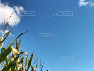 自然,風景,空,秋,ニューヨーク,屋外,海外,雲,晴れ,アメリカ,景色,飛行機雲,トウモロコシ畑,農家,秋空,日中,とうもろこし畑,フォトジェニック,インスタ映え,コーン畑,ポークアッグ