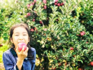 子ども,自然,風景,秋,ニューヨーク,木,屋外,緑,アメリカ,景色,女の子,少女,果物,りんご,林檎,食べる,美味しい,農家,日中,食欲,リンゴ,フォトジェニック,食欲の秋,インスタ映え,りんご狩り,りんごの木,ポークアッグ
