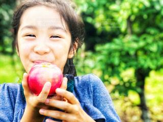 美味しそうに林檎を食べる女の子の写真・画像素材[1508633]
