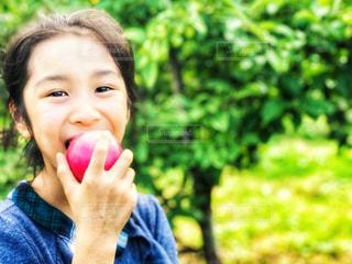 自然,風景,秋,ニューヨーク,木,屋外,海外,緑,アメリカ,景色,女の子,少女,果物,りんご,林檎,食べる,美味しい,果樹園,農家,日中,食欲,フォトジェニック,食欲の秋,インスタ映え,ポークアッグ