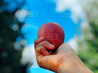 食べ物,風景,空,秋,ニューヨーク,木,屋外,海外,緑,雲,青空,手,葉,アメリカ,景色,果物,りんご,林檎,果実,果樹園,農家,日中,食欲,フォトジェニック,食欲の秋,インスタ映え,りんごの木,ポークアッグ