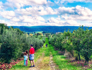 自然,風景,空,秋,ニューヨーク,木,屋外,海外,緑,赤,雲,アメリカ,景色,草,果物,樹木,人物,道,人,りんご,林檎,果樹園,秋空,草木,日中,リンゴ,フォトジェニック,インスタ映え,りんご狩り,りんごの木,ポークアッグ