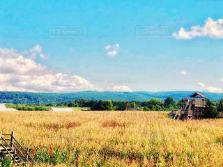 自然,風景,空,秋,ニューヨーク,屋外,海外,緑,雲,晴れ,アメリカ,山,景色,コーン,畑,トウモロコシ,トウモロコシ畑,農家,秋空,見晴台,コーン畑,ポークアッグ