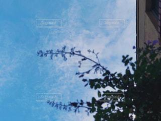 風景,空,建物,花,秋,ニューヨーク,海外,植物,雲,青,アメリカ,景色,マンハッタン,秋空,フォトジェニック,インスタ映え,ラベンダーセージ