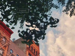 風景,空,建物,秋,ニューヨーク,木,海外,植物,雲,アメリカ,景色,イチョウ,マンハッタン,秋空,フォトジェニック,インスタ映え