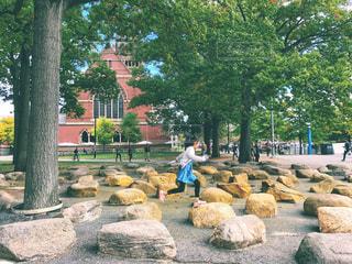 風景,建物,木,屋外,海外,緑,アメリカ,女の子,樹木,岩,人物,人,未来,広場,石,通り,夢,ポジティブ,ボストン,草木,目標,フォトジェニック,可能性,ケンブリッジ,ハーバード大学,マサチューセッツ