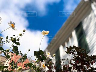 空,建物,花,海外,植物,白,雲,アメリカ,小さい,未来,夢,ポジティブ,可憐,草木,目標,フォトジェニック,前向き,可能性,ニューヘイブン,コネチカット
