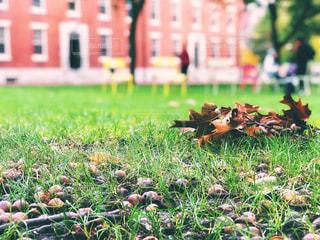 自然,建物,秋,木,芝生,屋外,海外,観光地,アメリカ,観光,草,落ち葉,旅行,地面,芝,ボストン,10月,ドングリ,ケンブリッジ,ハーバード大学,マサチューセッツ,ハーバード,10月下旬
