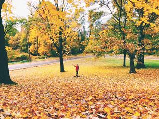 落ち葉の絨毯と女の子の写真・画像素材[1601420]