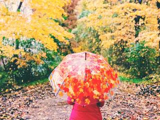 秋の雨の日のニューヨークの写真・画像素材[1603793]