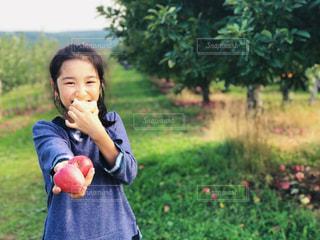 果樹園で林檎を食べながら、林檎を差し出す女の子の写真・画像素材[1616188]