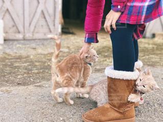 チェック柄のワンピースの女の子と子猫の写真・画像素材[1632813]