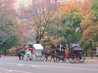 セントラルパークと観光馬車の写真・画像素材[1636503]