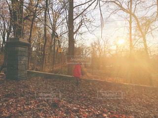 森の前に赤い消火栓の写真・画像素材[1641793]