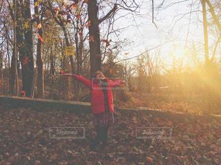 夕日を浴びて落ち葉で遊ぶの写真・画像素材[1643873]