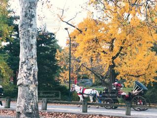 セントラルパークの紅葉と観光馬車の写真・画像素材[1647652]