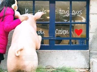 豚さんと一緒に‥の写真・画像素材[1692020]