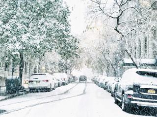 雪に覆われた車たちの写真・画像素材[1748498]