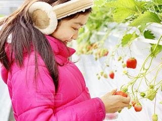 食べ物,ピンク,緑,赤,スマイル,葉,女の子,少女,いちご,苺,楽しい,嬉しい,フルーツ,果物,洋服,人物,人,笑顔,果実,いちご狩り,埼玉,新鮮,ストロベリー,微笑み,秩父,食材,フレッシュ,黄緑,イチゴ,イチゴ狩り,ダウン,ビニールハウス,いちご農園,イヤーマフ