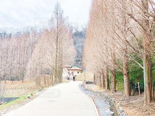 冬のあけぼの子どもの森公園の写真・画像素材[1819688]