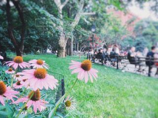 ワシントンスクエアパークのピンクの花の写真・画像素材[1822344]