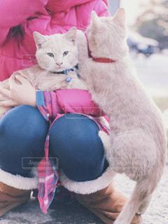 膝に上ろうとする猫の写真・画像素材[1841182]