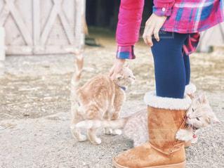 猫と触れ合う女の子の写真・画像素材[1841488]