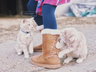 靴紐で遊ぶ子猫の写真・画像素材[1841509]