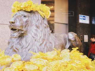 銀座三越のライオン像の写真・画像素材[1866329]