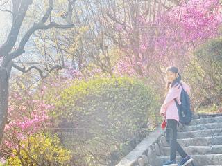 高尾山の春の中の写真・画像素材[2028345]