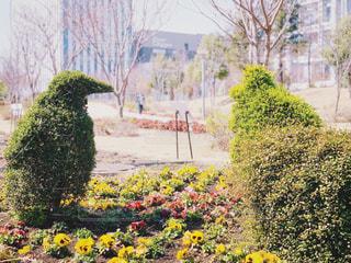 ペンギンの植木アートの写真・画像素材[2062067]
