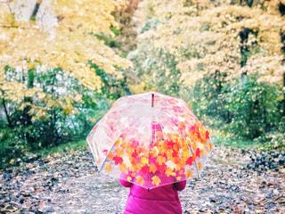 雨の日のお散歩の写真・画像素材[2219758]
