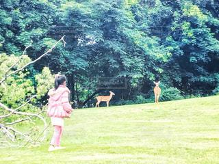 子ども,自然,風景,ニューヨーク,動物,森林,野生動物,木,芝生,屋外,ピンク,森,晴れ,後ろ姿,コート,散歩,アメリカ,景色,女の子,少女,大自然,樹木,人物,人,後姿,旅行,可愛い,鹿,NY,グリーン,レジャー,芝,思い出,お散歩,ビックリ,出会い,ライフスタイル,おでかけ,米国,想い出,9歳,ジャケット,お出かけ,野生,郊外,日中,子鹿,ダウン,遭遇,小鹿,フォトジェニック,出会う,出逢う