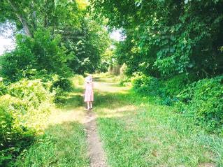 自然,風景,夏,ニューヨーク,森林,屋外,海外,森,緑,ワンピース,晴れ,後ろ姿,帽子,散歩,林,アメリカ,景色,日差し,小道,女の子,少女,光,草,樹木,雑草,人物,道,人,外国,後姿,旅行,土,木陰,地面,NY,グリーン,レジャー,ハイキング,森林浴,冒険,探検,お散歩,通り,一本道,ライフスタイル,おでかけ,米国,9歳,小径,草木,お出かけ,日中,フォトジェニック,散策,半袖,タリータウン