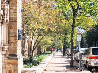 男性,10代,30代,風景,建物,紅葉,自転車,街並み,木,屋外,緑,後ろ姿,散歩,車,葉,アメリカ,景色,日差し,女の子,観光,樹木,人物,道,人,外国,旅行,自動車,歩道,地面,路上駐車,レジャー,お散歩,通り,10歳,ライフスタイル,おでかけ,米国,草木,お出かけ,日中,フォトジェニック,散策,路駐,キックボード,町歩き,イエール,学園都市,ニューヘイブン,コネチカット州