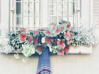 植物に顔を隠して‥の写真・画像素材[2431410]