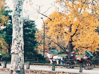 秋のセントラルパークを走る観光馬車の写真・画像素材[2670593]