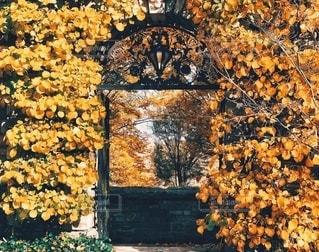 秋の壁の写真・画像素材[2670698]