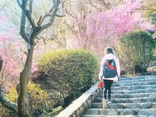 石段を上る娘の写真・画像素材[2795520]