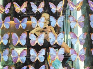 蝶の標本の前での写真・画像素材[2806443]