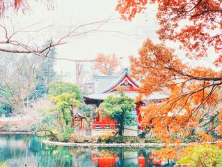 井の頭公園弁財天の写真・画像素材[2835257]