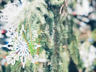ツリーと雪の結晶の写真・画像素材[2868350]