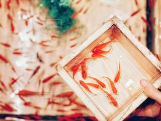 冬の金魚すくい2の写真・画像素材[2871914]