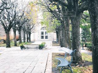 木の前のベンチの写真・画像素材[2873550]