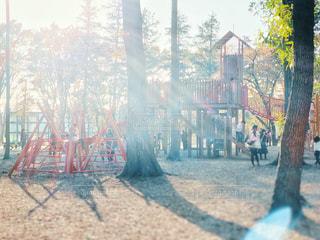 秋の公園と太陽の写真・画像素材[2903609]